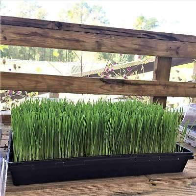 1020 Trays Strength Seed Tray