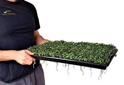 Microgreen 60 Shallow Seed Tray with